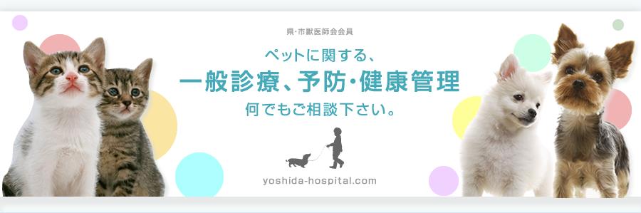 ペットに関する一般診療、予防、健康管理についてのご相談ください