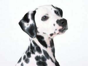 犬・猫を専門に診療を行っています