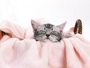 お休み中の猫ちゃん