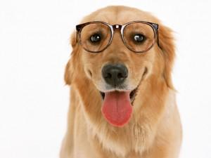 犬・猫の専門獣医科です
