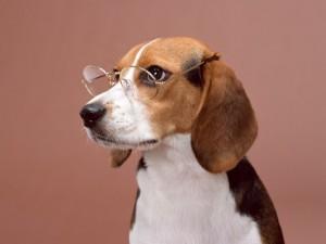 犬と猫を専門にサービスを提供しております