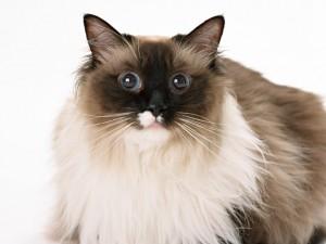 猫・犬を専門にサービスを提供しております