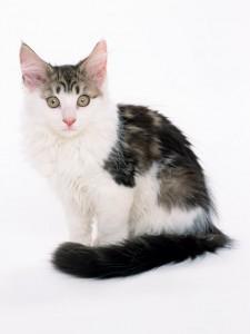 猫・犬専門の獣医科です