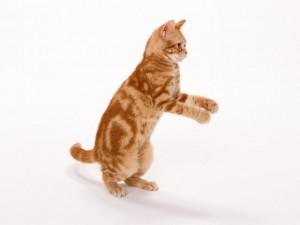 猫・犬を専門にサービスを提供しています