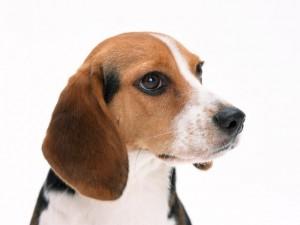 犬・猫専門の獣医科です