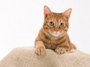 猫・犬専門に診療を行っています