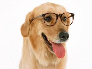 犬、猫の診療とサービスを提供しています