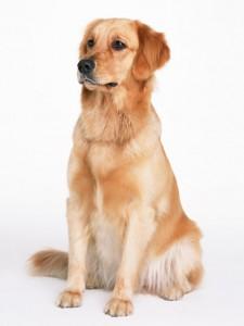 犬、猫を専門にサービスを提供しています