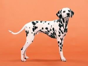 犬、猫専門の獣医科です