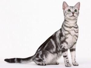 猫と犬専門の獣医科です