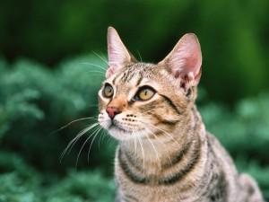 猫と犬専門にサービスを提供しています