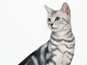 猫、犬専門の獣医科です