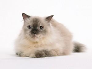 猫、犬専門にサービスを提供しています