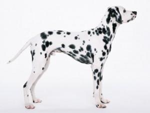 犬、猫を専門に診療を行っています