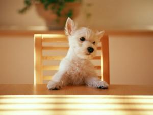 テーブルに座る犬