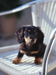 椅子に乗った犬