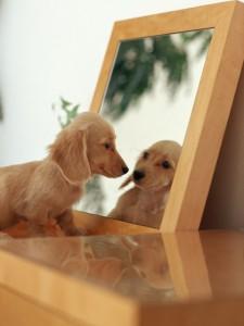 鏡を見る犬